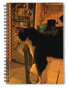 Taddeo E Il Frigo Spiral Notebook