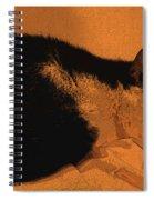 Taddeo Pensa Spiral Notebook
