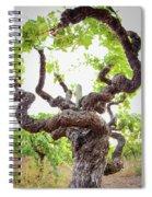 Tai Chi Vine Spiral Notebook