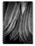 Tail Feathers Abstract Spiral Notebook