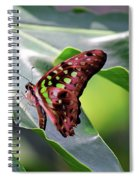 Tailed Jay Butterfly Spiral Notebook