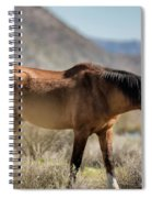 Take  A Walk On The Wildside  Spiral Notebook