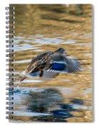 Mallard Take-off Spiral Notebook