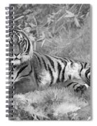 Takin It Easy Tiger Black And White Spiral Notebook