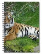Takin It Easy Tiger Spiral Notebook