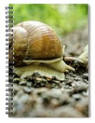 Taking A Rest Spiral Notebook