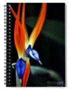 Taking Aim Spiral Notebook