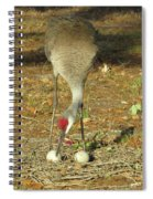 Taking Care Of Her Eggs  Spiral Notebook