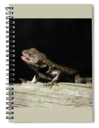 Talking Lizard Spiral Notebook