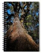 Tall Oak Spiral Notebook