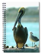Tall Pelican Spiral Notebook