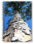 Tall Pine Tree In Summer Spiral Notebook