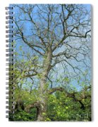 Tall Tree Spiral Notebook