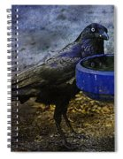 Taming Of The Crow Spiral Notebook