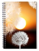 Taraxacum Sunset Spiral Notebook