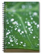 Taro Leaf Spiral Notebook