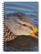 Taster Spiral Notebook