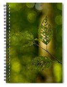 Tattered Leaves Spiral Notebook
