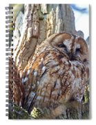 Tawny Owls Spiral Notebook