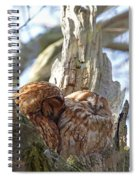 Tawny Owls In Love Spiral Notebook