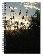 Teasel Sunset Glow Spiral Notebook