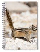 Teasing Chipmunk #3 Spiral Notebook