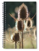 Teasle In Morning Light Spiral Notebook