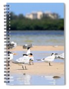 Terns At Fort Myers Spiral Notebook