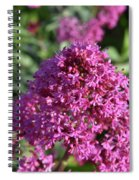 Terrific Cluster Of Blooming Pink Phlox Flowers Spiral Notebook