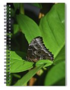 Terrific Eyespots On A Owl Butterfly On Leaves Spiral Notebook