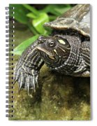 Tess The Map Turtle #2 Spiral Notebook