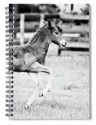 Testing The Wheels - Bw Spiral Notebook