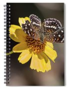 Texan Crescent Butterfly On Marigold-img_1348-2016 Spiral Notebook