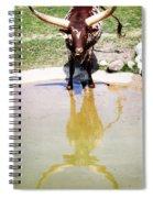 Texas Longhorn Spiral Notebook