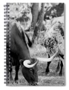 Texas Longhorn Steer In Black And White Spiral Notebook