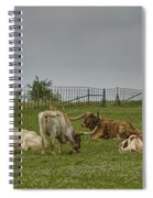 Texas Longhorns And Wildflowers Spiral Notebook