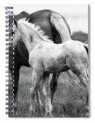 Texas Ranch  Spiral Notebook