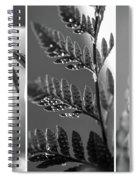 Texture Triptych Spiral Notebook