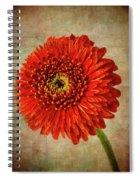 Textured Red Daisy Spiral Notebook
