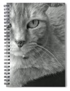 That Spotted Nose Spiral Notebook