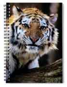 That Tiger Look Spiral Notebook