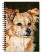 The Adventurous Dog Spiral Notebook