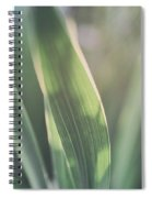 The Allotment Project - Sweetcorn Leaves Spiral Notebook