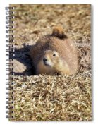 The Amazing Black-tailed Prairie Dog Spiral Notebook
