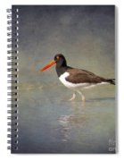 The American Pied Oystercatcher By Darrell Hutto Spiral Notebook