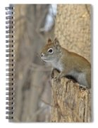 The American Red Squirrel Spiral Notebook