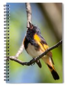 The American Redstart Spiral Notebook