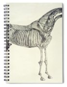 The Anatomy Of The Horse Spiral Notebook