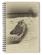 The Baby Spiral Notebook