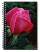 The Beautiful Rose Bud Spiral Notebook